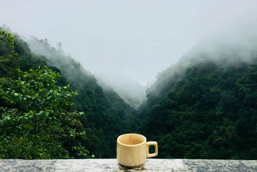 hemp tea benefits