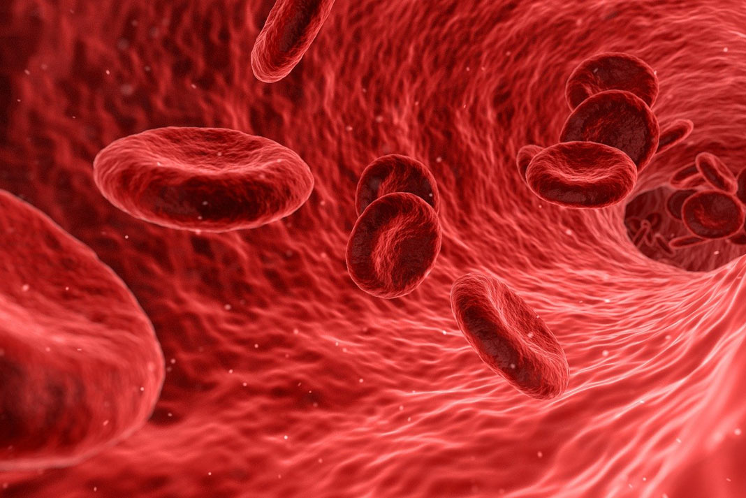 red-blood-cells