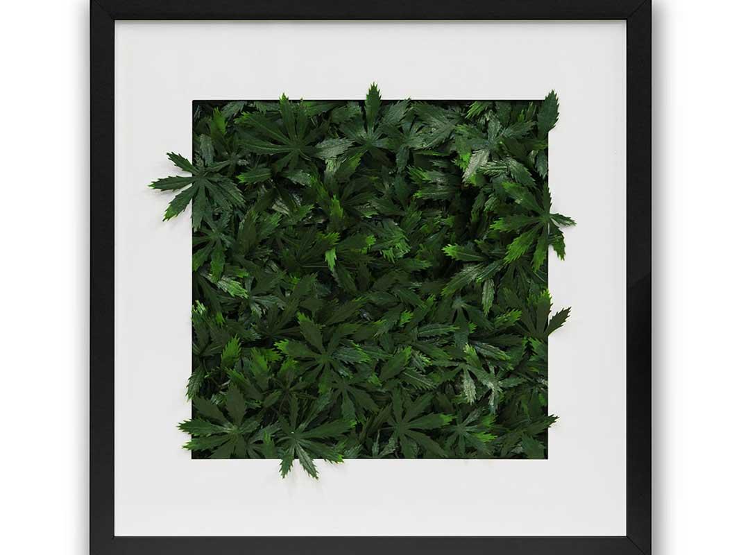 cannabis-leaf-backdrop